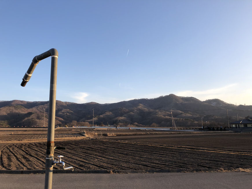 3月6日のレタス畑。