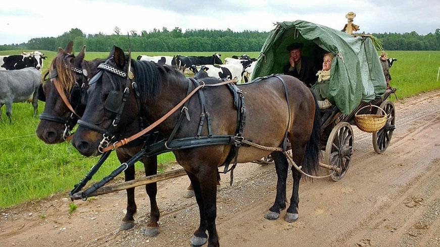 Žirgų kinkiniai lietuje