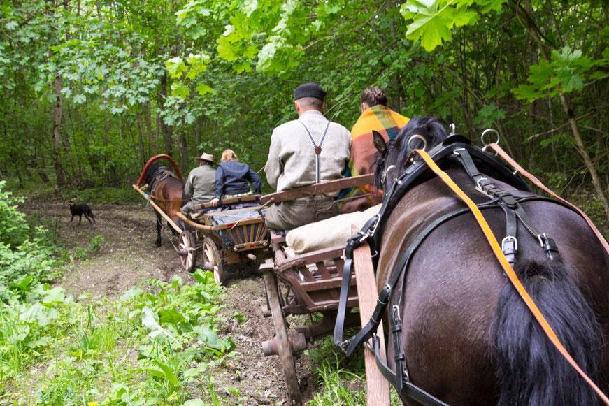 Žirgų ir vežimų vilkstinė Žemaitijos miške su šuniu