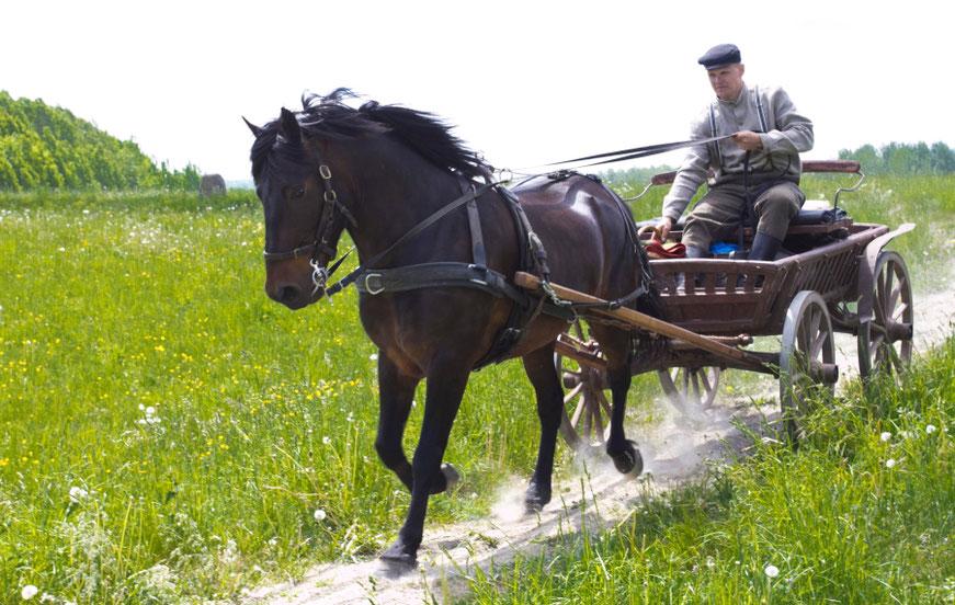 Marius Kleišmantas lekia su žirgu žemaituku Kantu Lietuvos laukais