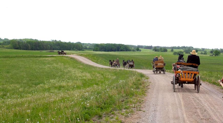 Žirgų traukiami vežimai rieda laukais