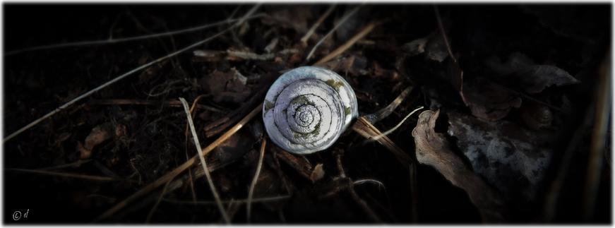 Ein Zeuge der Vergangenheit: Ein verbliebenes Gehäuse einer Bänderschnecke
