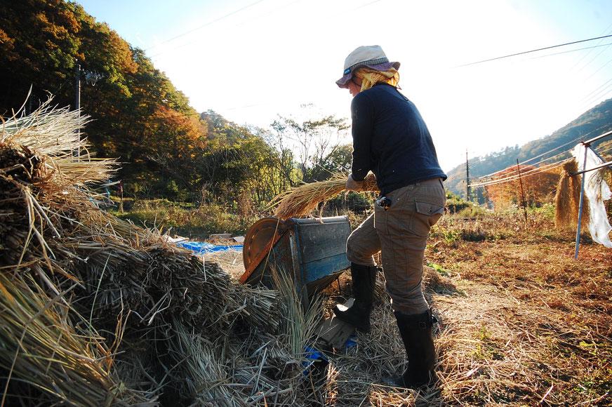 稲刈り後の足踏み脱穀