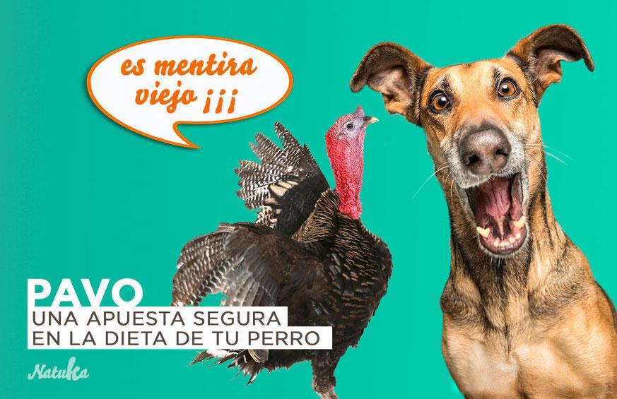 carne de pavo para perros