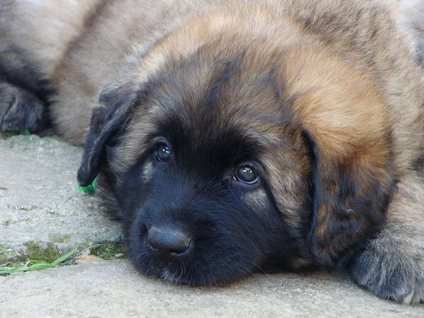 Iago, 6 Wochen alt
