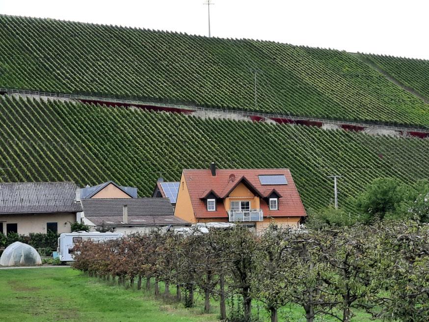 Wirklich steile Hanglagen in Mainfranken!