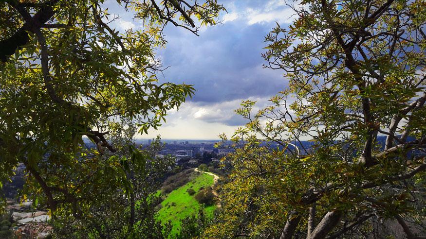 """""""Follow me into Wonderland"""" - Blick auf Los Angeles, von einer Wegkurve knapp unterhalb des Griffith Observatory, Urlaubsfoto Januar 2017, © Kathy Wild"""