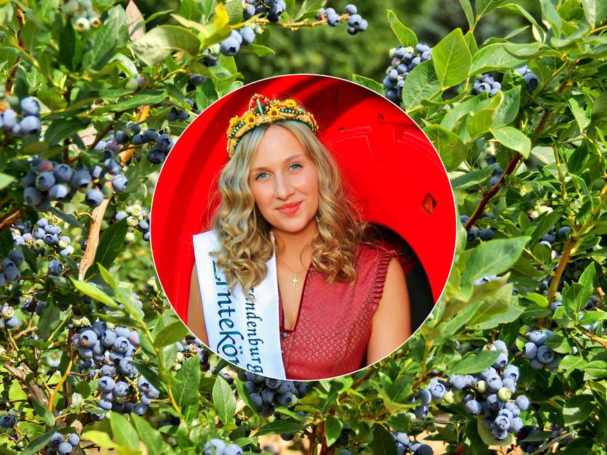Brandenburger Erntekönigin Theresia Ruffert 2019/2021 eröffnet offiziell die Brandenburger Heidelbeersaison 2021