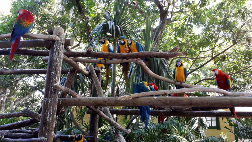 Papageien am Terminal