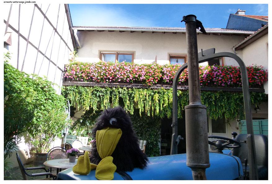 Meine Unterkunft: Weingut Alt in Monzingen