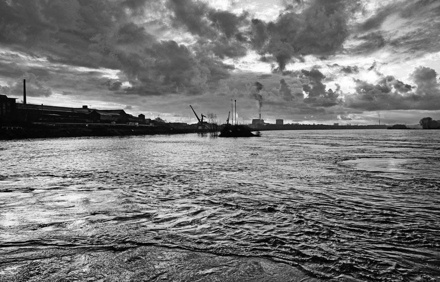 Foto vom 05.02. Im Bildvordergrund die deutlich erkennbare Neerströmung. Hervorgerufen durch den Molenkopf zweigt sich von der Hauptströmung des Rheins die gegenläufige Neerströmung ab und dringt mit Schwemmgut in Kultus- und Südhafen ein.