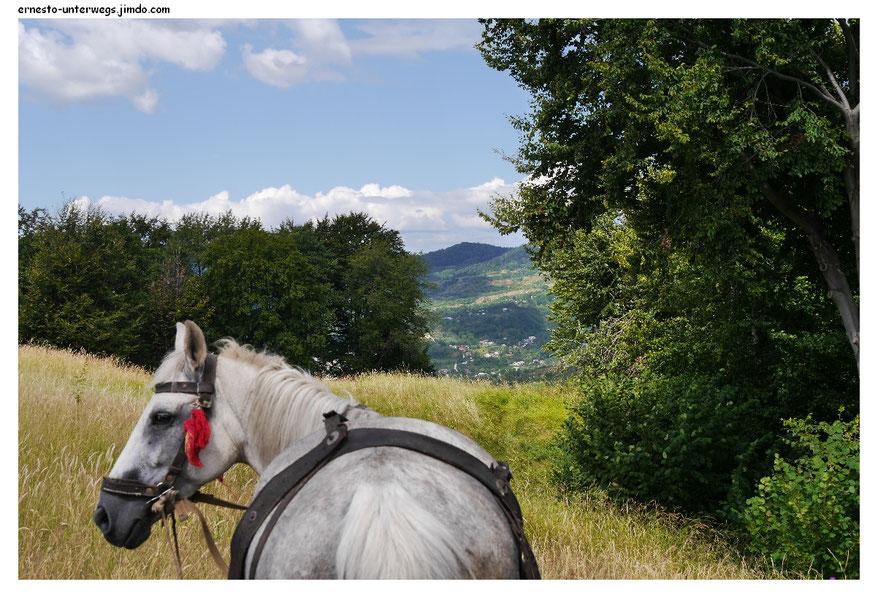 In der Hoffnung, dass rumänische Pferde auch polyglott sind, sprach ich dieses an. Aber es guckte nur irritiert.