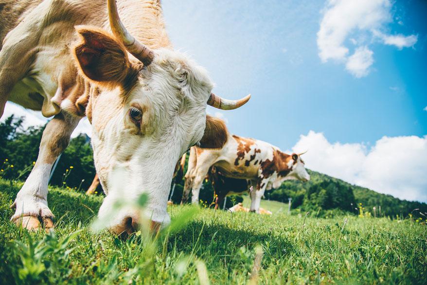 Dr. Matthias Marquardt, Eisenzentrum Hannover, Vitalstoffe, Kühe können Vitamin B12 bilden