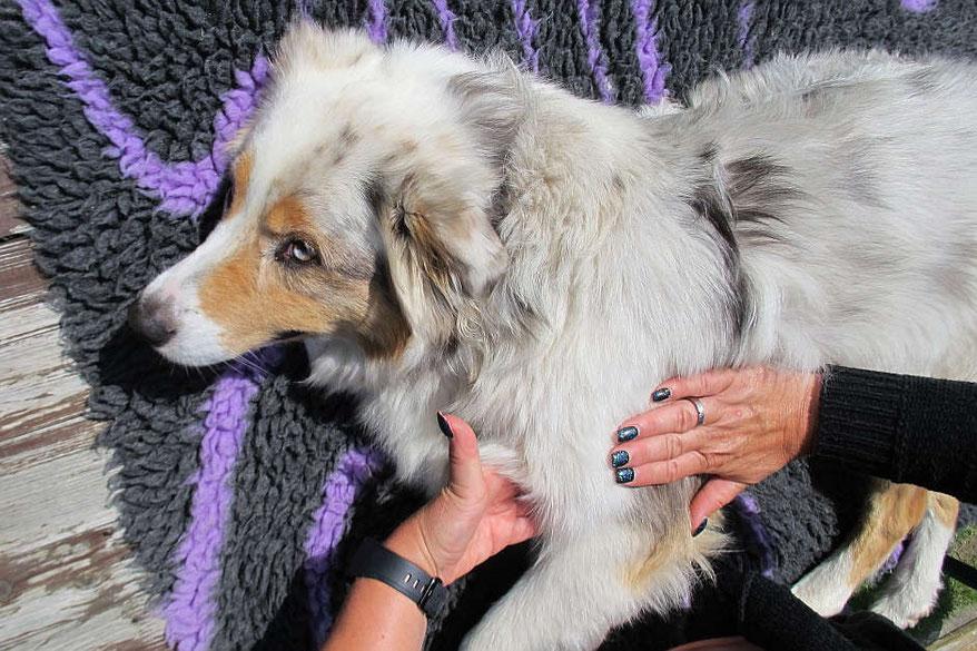 manuelle therapie für hunde