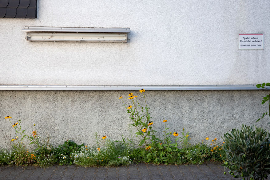 Guerilla Gardening im Garagenhof mit Samenmischung.