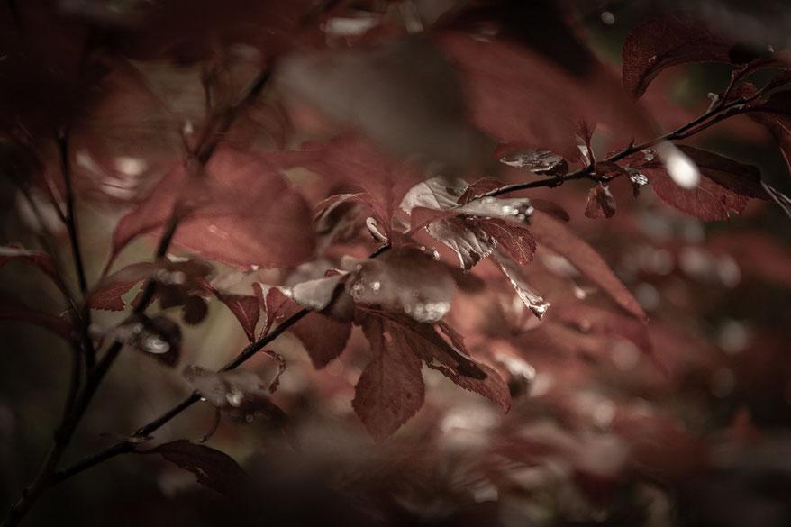 © Sibylle Pietrek 2019_Sacro Bosco-Bormarzo-Italien_190529_2395