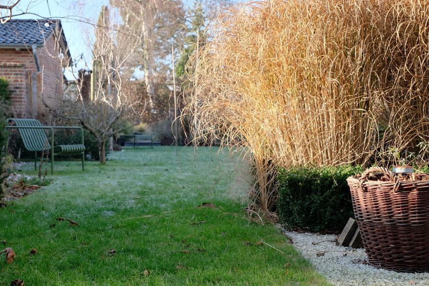 dieartigeGARTEN // Januar, Wintergarten - Chinaschilf, Reif + Sonnenschein