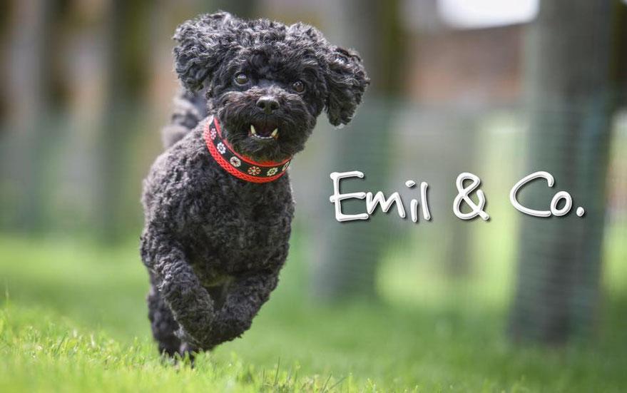 Hundegeschirr Massanfertigung individuell Kundenwunsch Schweiz Hundehalsband ergonomisch gepolstert von Tierärzten empfohlen