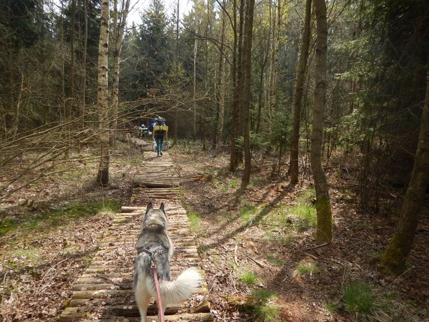 Sehr schöne Wege zum Schluss. Unter anderem dieser etwas brüchige Holzbohlenweg.