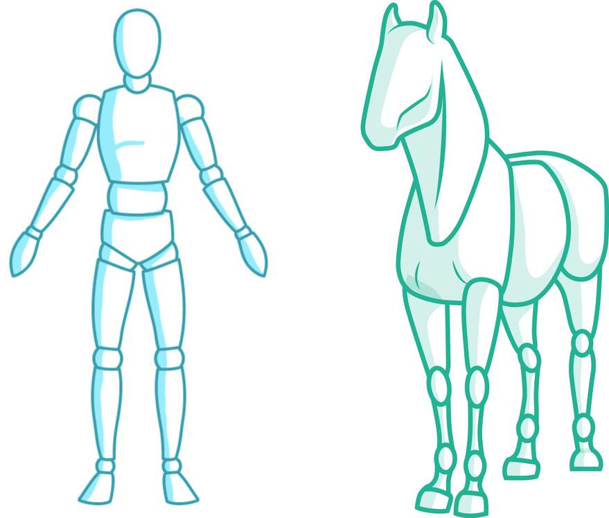 Wirkung der Faszien Mobilisation auf Pferd und Reiter