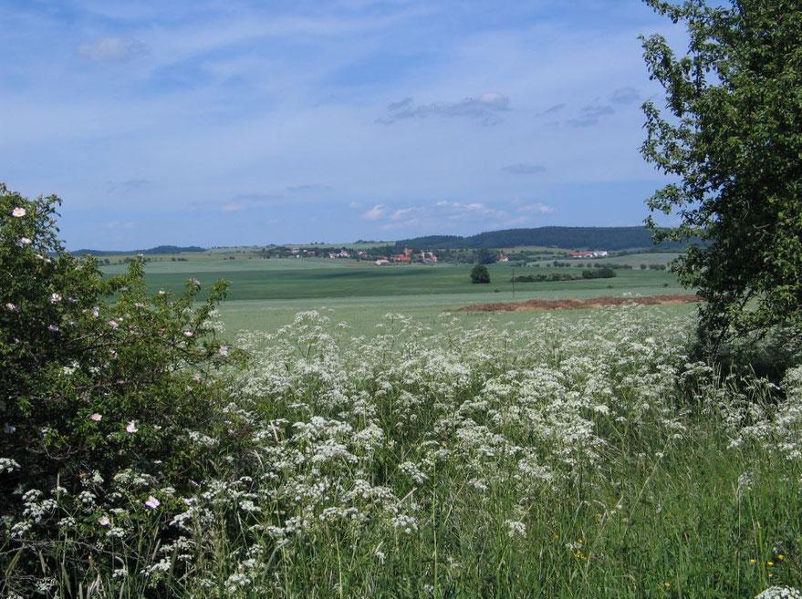 Modschiedl (Kreis Luditz/Westböhmen), der Ursprung vieler Mikut(t)a, aus Richtung Nebosedl.  Foto mit freundlicher Genehmigung von Erich Klier.