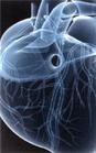 Les maladies vasculaires comme l'infarctus et l'attaque cérébrale représentent environ la moitié des décès
