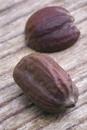 ホホバSimmondsia chinensisの実