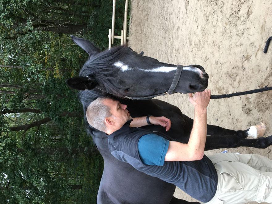 Faszien Seminar Pferde: Lernen Sie, die Faszien Ihres Pferdes selber zu behandeln