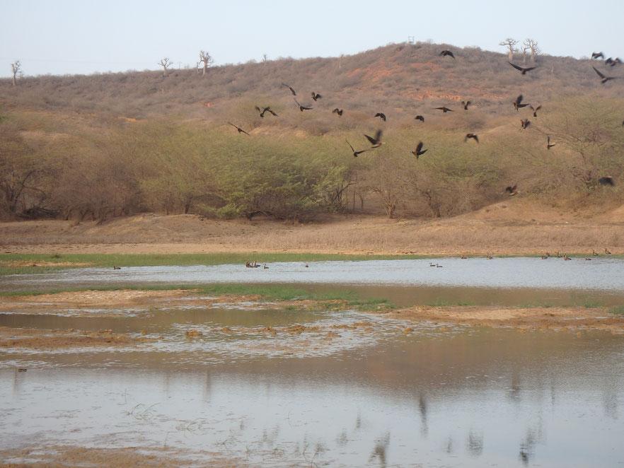 Reserve Naturelle de Popenguine