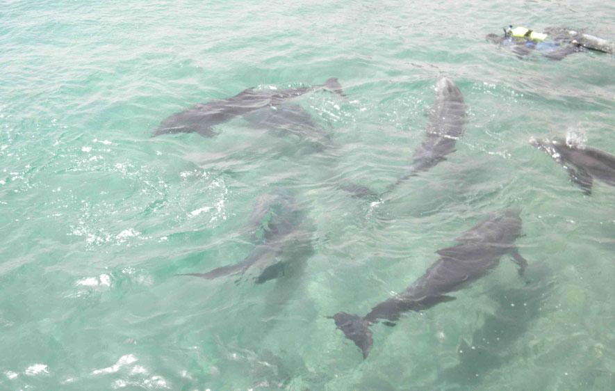 Delfine im Dolphin Reef