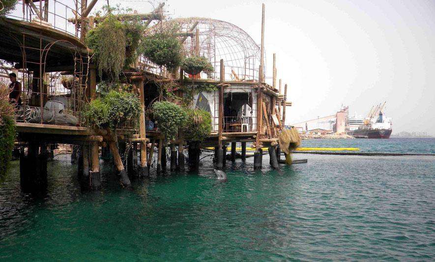 Blick vom Dolphin Reef zum Kreuzfahrtschiff