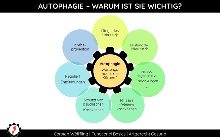 Was macht Autophagie?