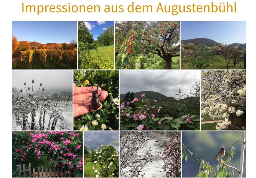 Bilderzusammenstellung Blüten, Tiere, Bäume