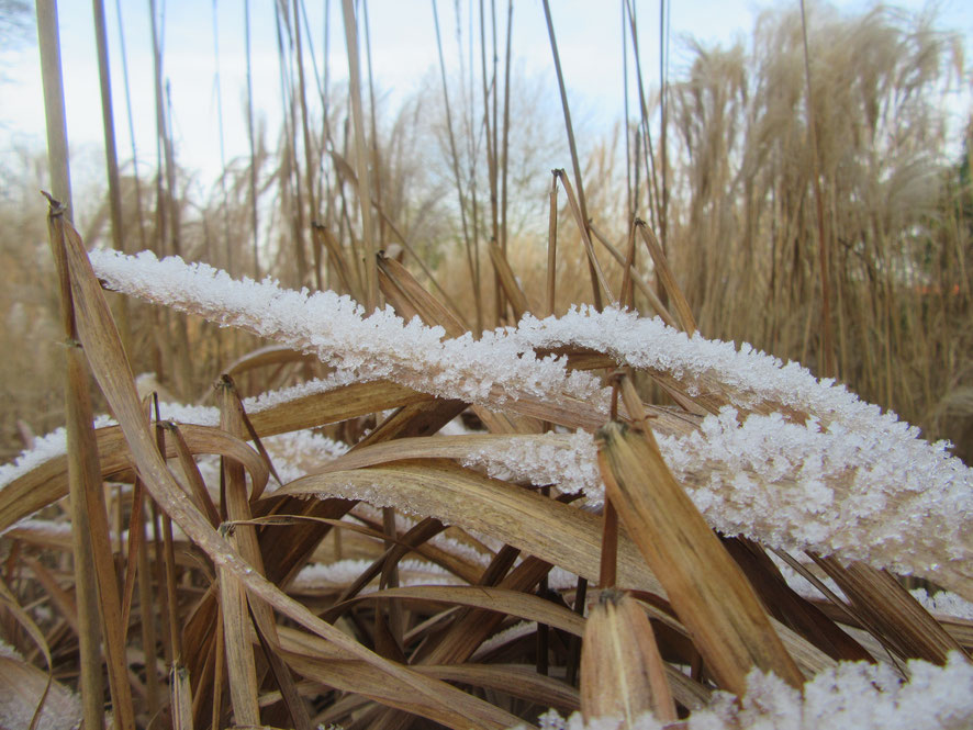 Detailansicht im Winter