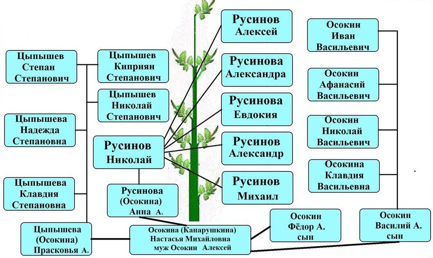 Древо рода Капарушкиной Н.М.