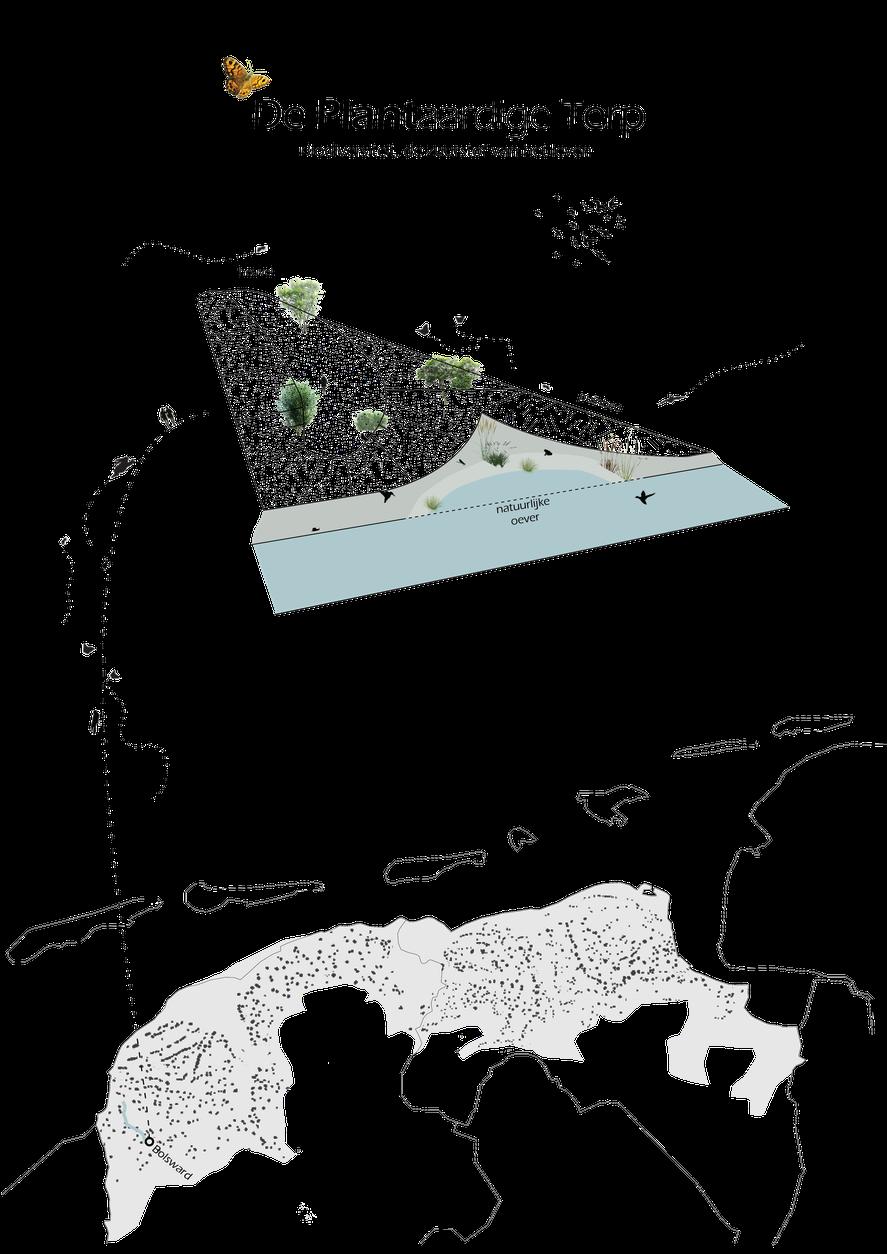 De Plantaardige Terp, Bolsward, natuurlijke oever, biodiversiteit, bloemvegataties