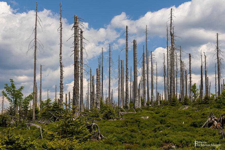 Foto: G.Feichtenschlager