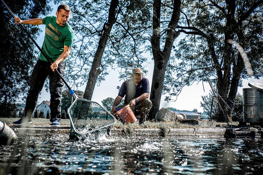 Fisch Frischer Fisch Fischzucht Forellenzucht Simon