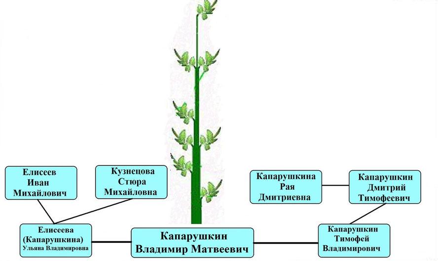 Древо рода Капарушкина В.М.
