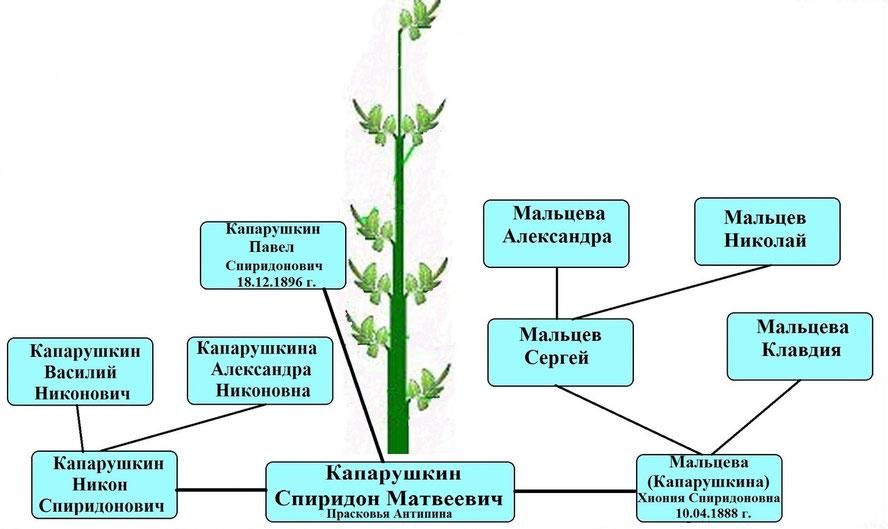 Древо рода Капарушкина Спиридона Матвеевича