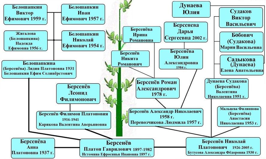 Древо рода Берсенёва П.Г.
