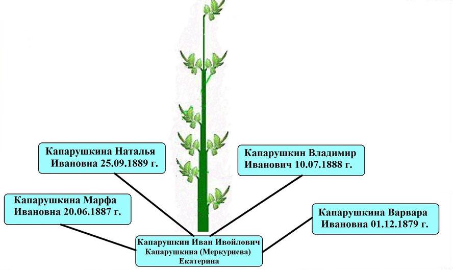 Древо рода Капарушкина Ивана Ивойловича