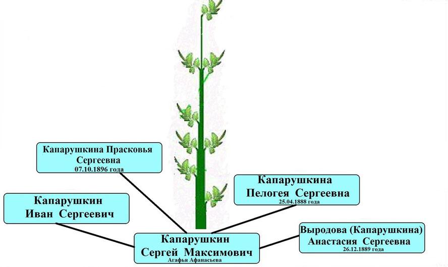 Древо рода Капарушкина Сергея Максимовича