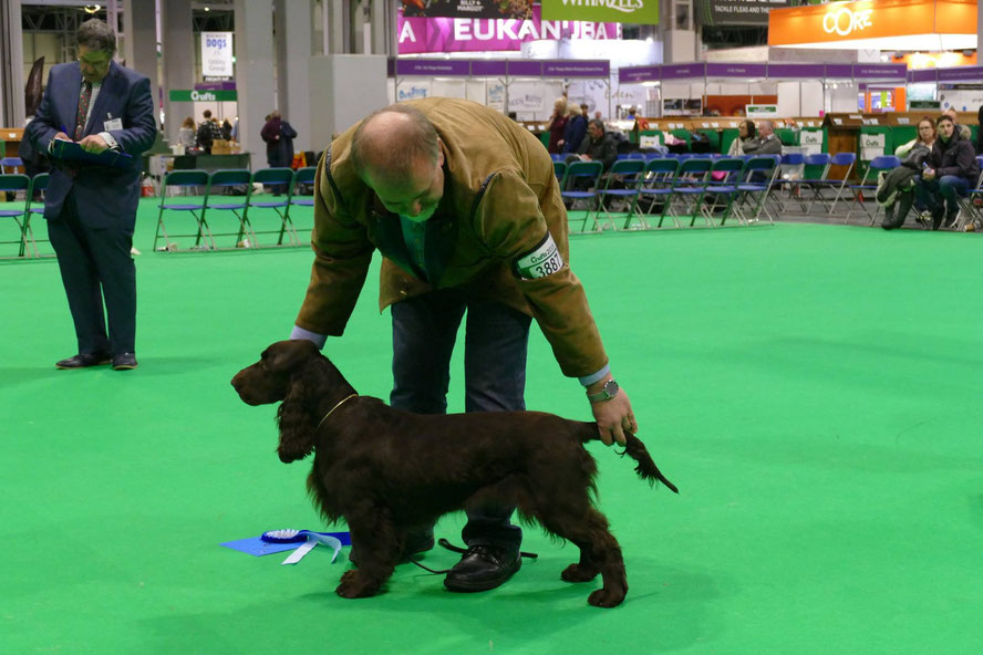 """Noble Alice vom Belauer See"", zweiter Platz Junior Class, Crufts 2019, Foto: Ron Crow"