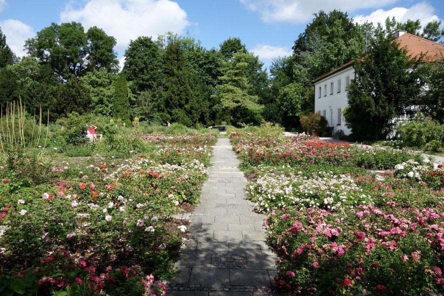 Rosengarten, Rosen, Baumschule Bischweiler