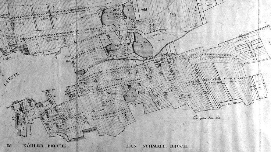 Karte der Hochgräflichen von Schwicheldtschen Zehntflur der Bauerschaft Leeste, Amts Syke (1831).  12