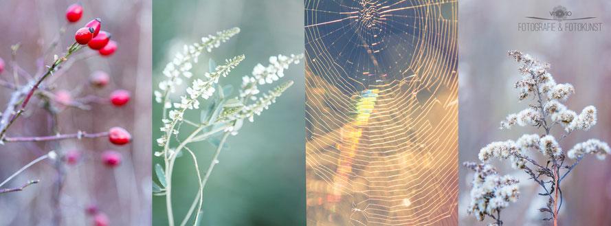 Frühlingshafter Winter im Münsterland. Von links nach rechts: Hagebutte, Weißer Steinklee (Honigklee), ein Spinnennetz im goldenen Morgenlicht, verblühtes Goldrutenkraut | www.visovio.de