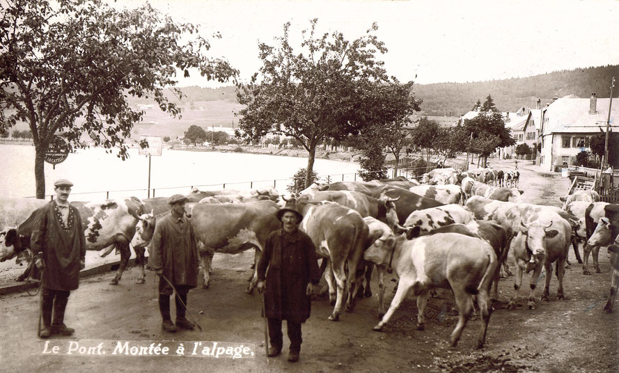 End of May – beginning of June, many herds of cows are run through the village of Le Pont to the mountain pasture