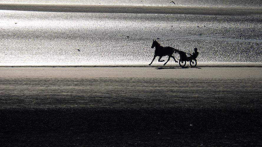 Mathieu Guillochon, photographe, couleurs, rivages, Manche, Utah Beach, trotteur, aube, sulky, plage de sable, Normandie, marée basse