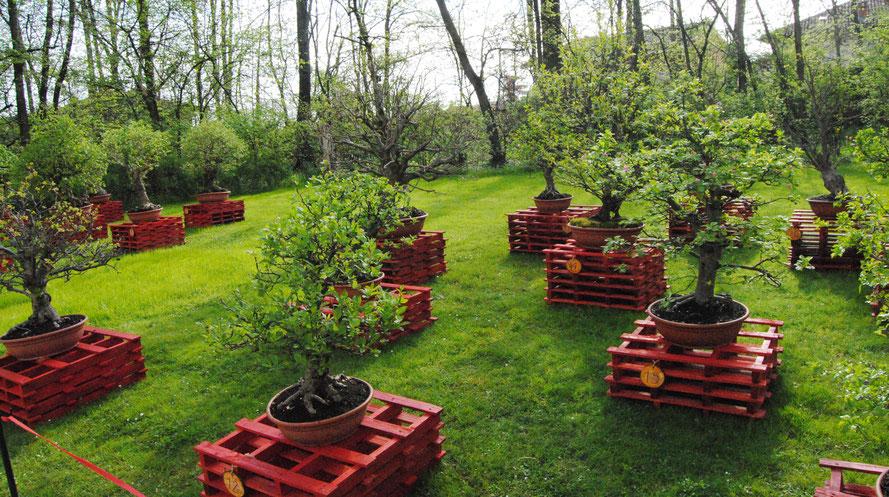 """Esposizione dei bonsai di Franco Carena presso il castello di Pralormo in occasione di """"Messer Tulipano"""""""